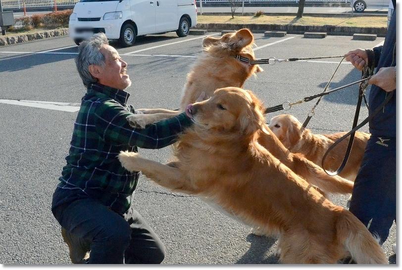 DSC_8371-1大型犬になれていらっる方