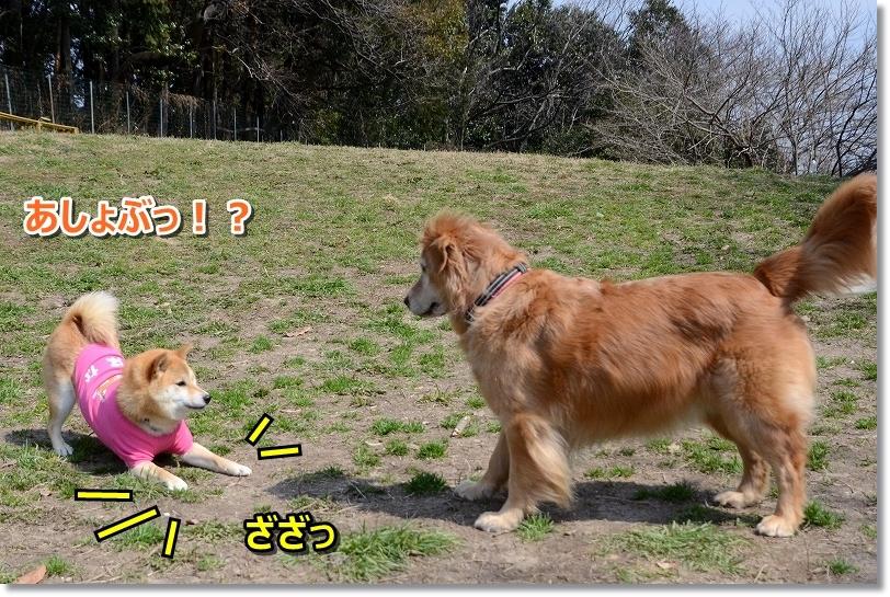DSC_8524A所びましょ♪