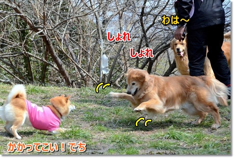 DSC_8529しょれ~