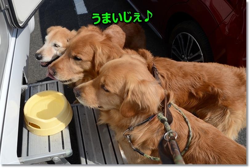DSC_8648ちぇ~みじゅか~