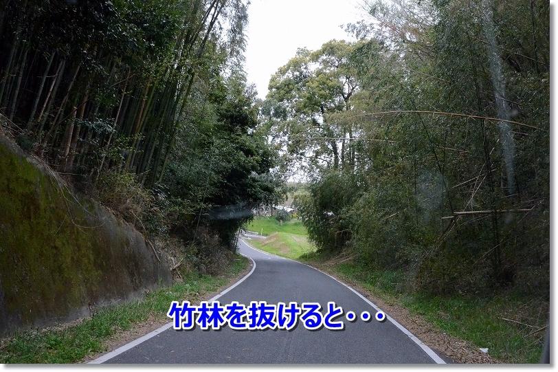 DSC_0301竹林を抜けると