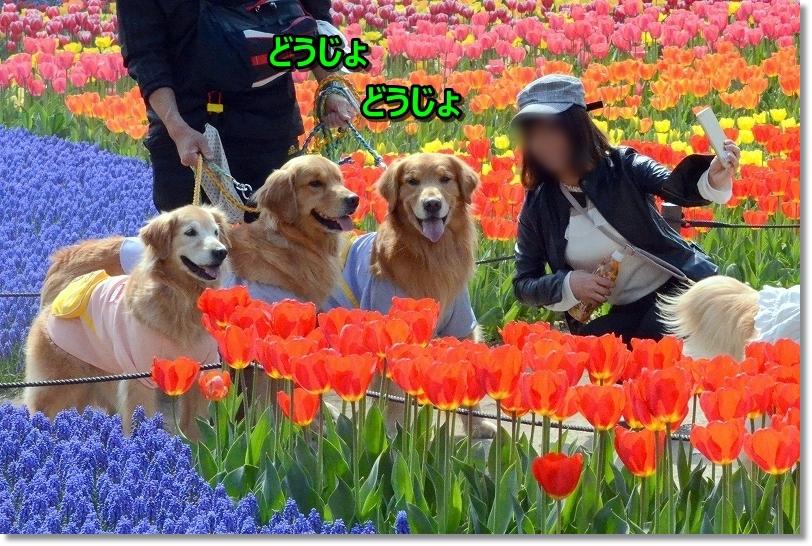DSC_9853d~じょど~じょでち