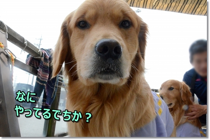 DSC_0102なにゅh?