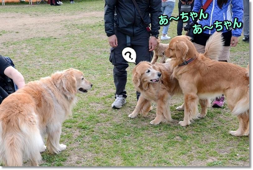 DSC_0153あーちゃんしゅきっ