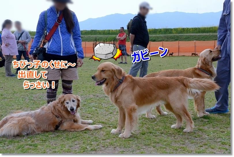 DSC_0155( ̄▽ ̄;)!!ガーン