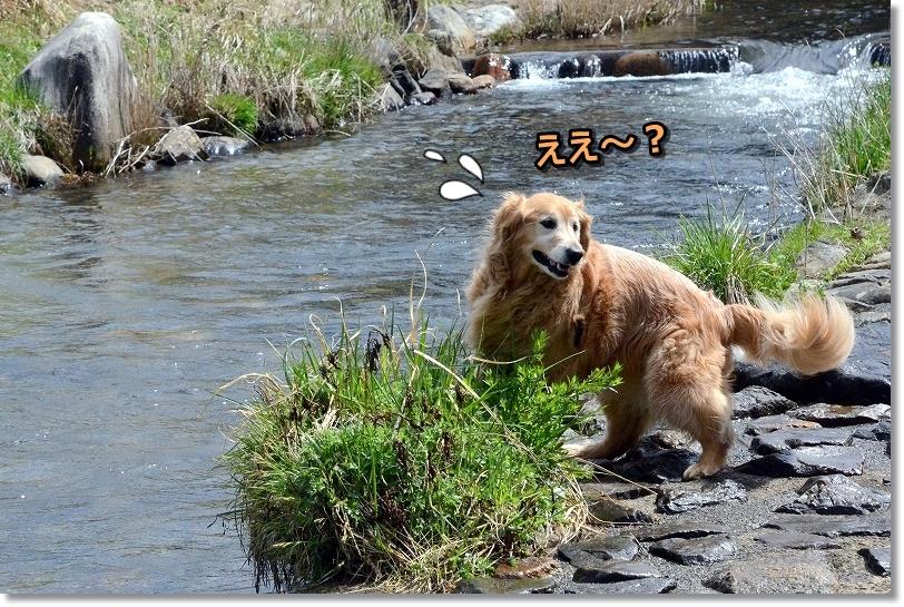 DSC_0367ええ~?