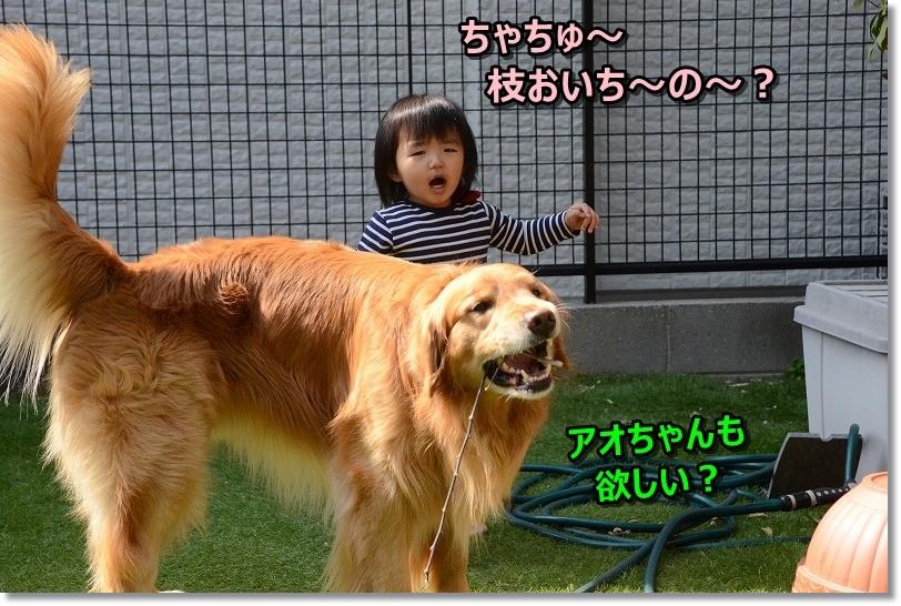 DSC_9554枝おいち~?