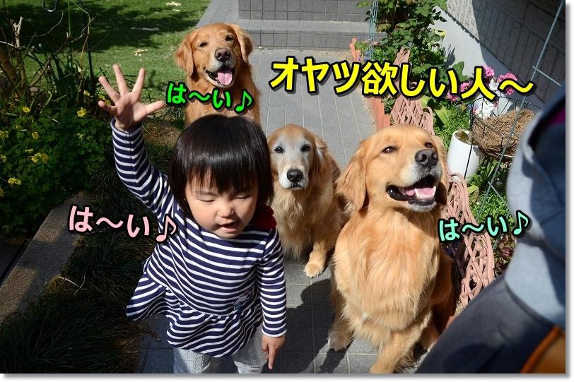 DSC_9596オヤツ欲しい人~は~い - コピー