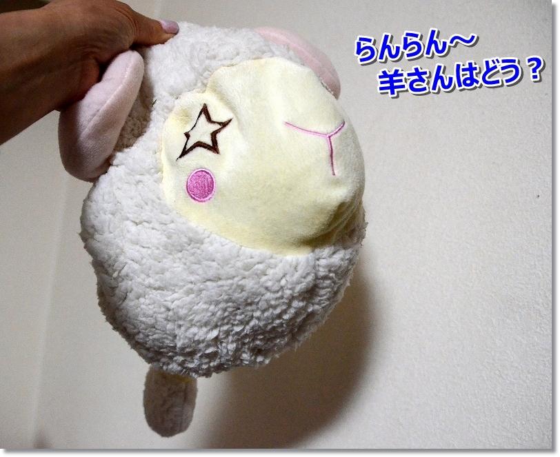 DSC_8896ほれ!
