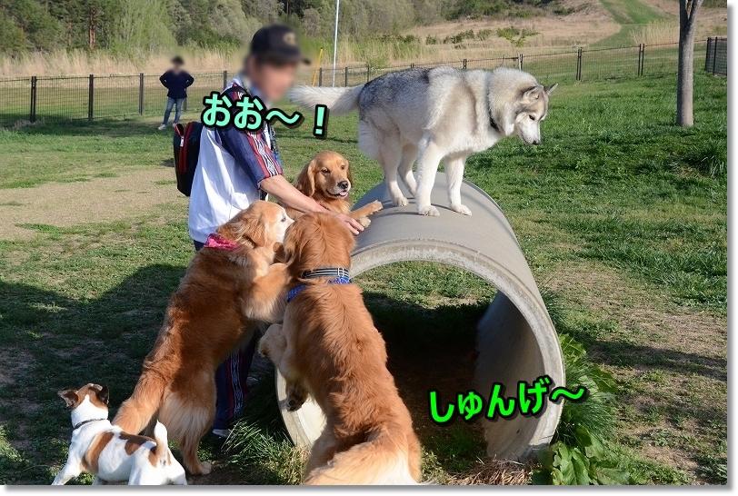 DSC_0856しゅんげ~♪