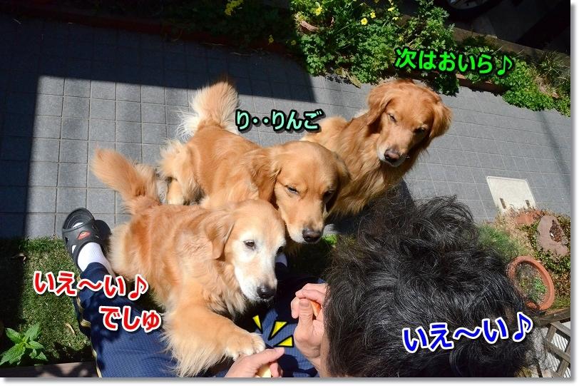 DSC_1454朝りんご