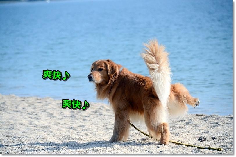 DSC_1873爽快爽快じょぼぼ