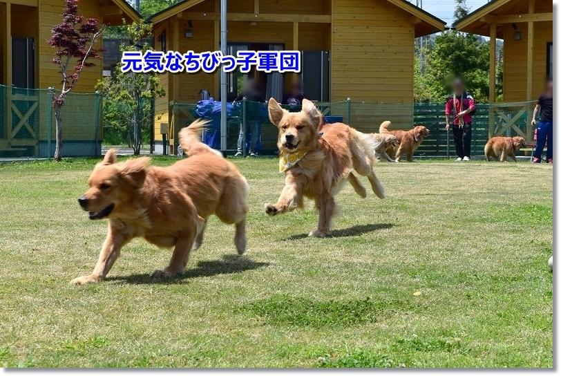 201855-6 琵琶湖_180518_0143