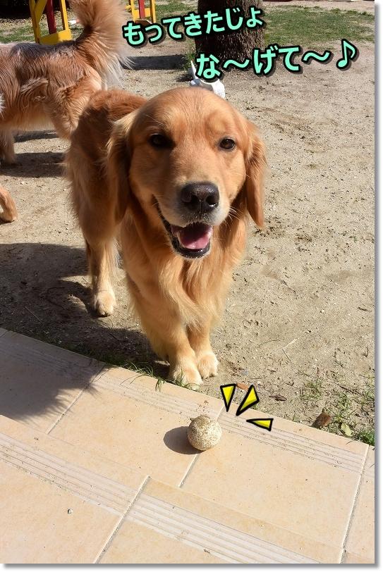 DSC_2231蘭丸はボールばっか 投げて~