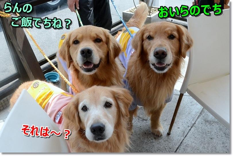 DSC_0018_20180416175726d47.jpg