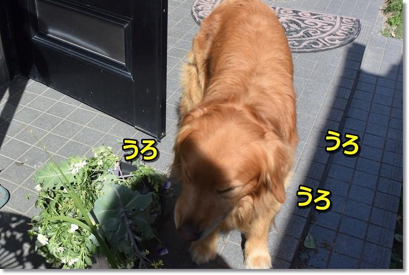 DSC_1953_20180515223536b70.jpg