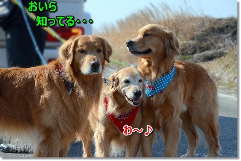 DSC_9106_20180330201637c94.jpg