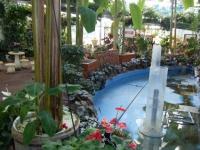 2018-01-14花と泉の公園ベゴニア館227
