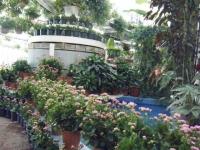 2018-01-14花と泉の公園ベゴニア館224