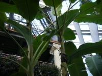 2018-01-14花と泉の公園ベゴニア館233