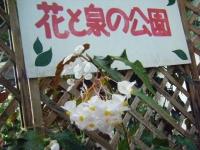 2018-01-14花と泉の公園ベゴニア館241