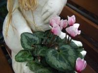 2018-01-14花と泉の公園ベゴニア館244