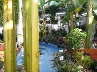 2018-01-14花と泉の公園ベゴニア館252