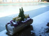 2018-01-14花と泉の公園ベゴニア館266