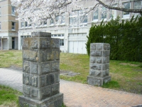 2018-04-17千厩支所の桜ーしろぷーうさぎ03