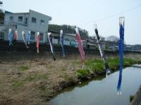 2018-04-20千厩川の鯉のぼり05