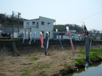 2018-04-20千厩川の鯉のぼり04