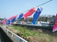 2018-04-20千厩川の鯉のぼり02