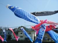2018-04-20千厩川の鯉のぼり10