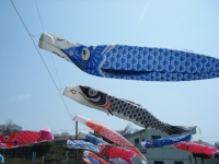 2018-04-20千厩川の鯉のぼり09