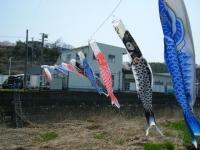 2018-04-20千厩川の鯉のぼり07