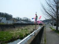 2018-04-20千厩川の鯉のぼり23