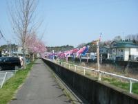 2018-04-20千厩川の鯉のぼり20