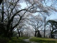 2018-04-19弥あ館山公園04
