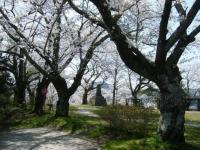 2018-04-19弥あ館山公園03