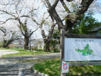 2018-04-19弥あ館山公園01