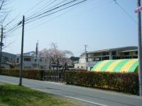 2018-04-20千厩川の鯉のぼり27