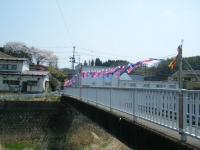 2018-04-20千厩川の鯉のぼり36