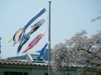 2018-04-20千厩川の鯉のぼり32