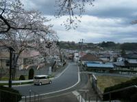 2018-04-17千厩支所の桜ーしろぷーうさぎ41