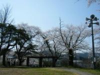 2018-04-19弥あ館山公園08