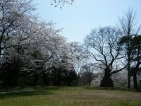 2018-04-19弥あ館山公園07