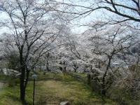 2018-04-19弥あ館山公園14