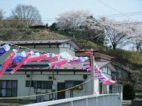 2018-04-20千厩川の鯉のぼり42