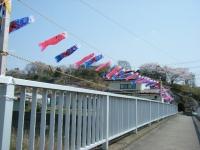 2018-04-20千厩川の鯉のぼり40