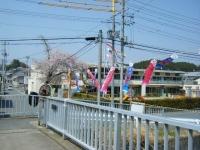 2018-04-20千厩川の鯉のぼり48
